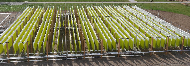 Biokerosine from Microalgae