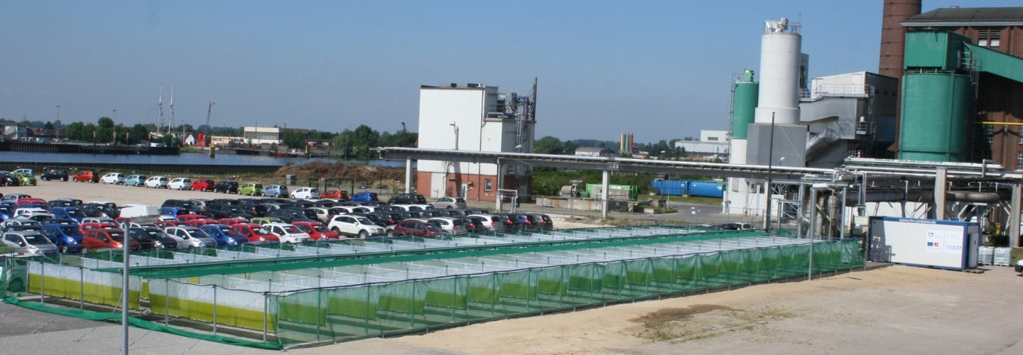 Greenhouse gas mitigation with Microalgae