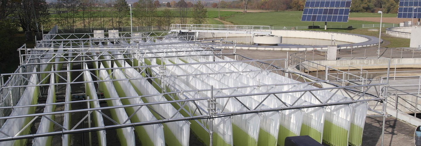 Nutrient removal with Microalgae